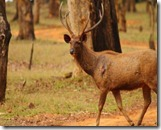 rajiv gandhi wild life sanctuary