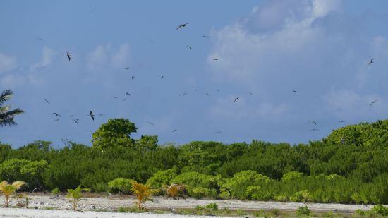 Vögel auf Tetiaroa