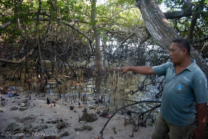 bali-barat-national-park-mangrovie