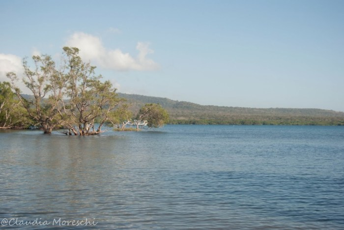 bali-barat-national-park