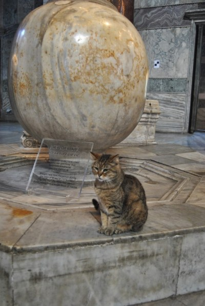 Gatto all'interno di Santa Sofia, a Istanbul