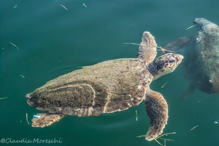 L'incontro con le tartarughe al porto di Argostoli