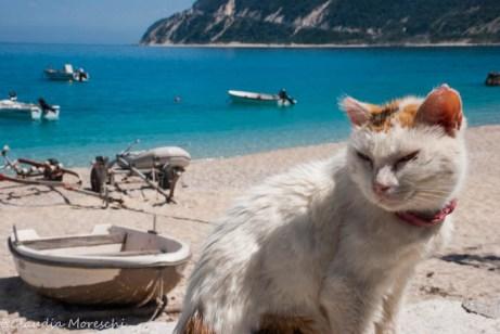 gatto-agios-nikitas-lefkada