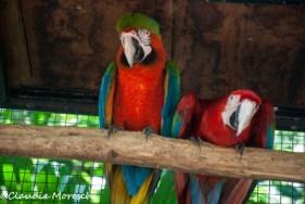 parque-das-aves-5