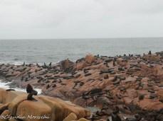 Colonia di leoni marini a Cabo Polonio