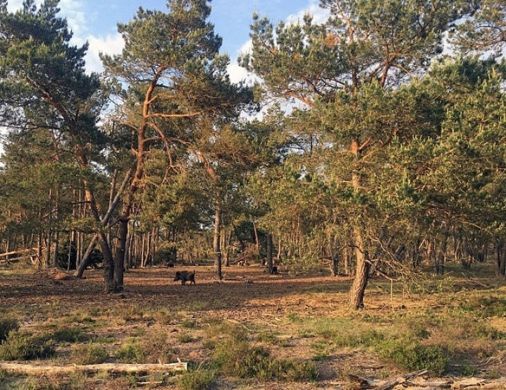 Best day trips from Amsterdam   Hoge Veluwe National Park