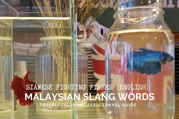 Malaysian Slang Words Only Locals Use