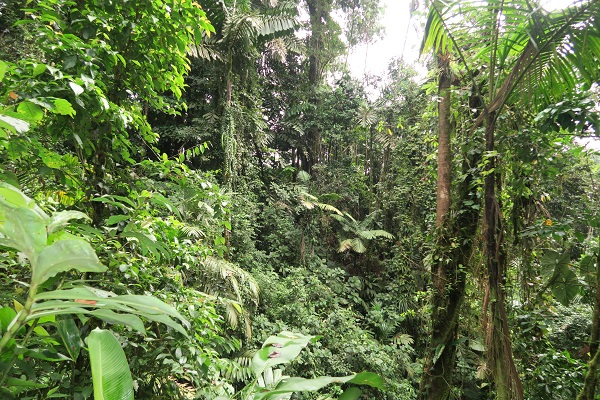 arenal volcano rainforest costa rica travel blog