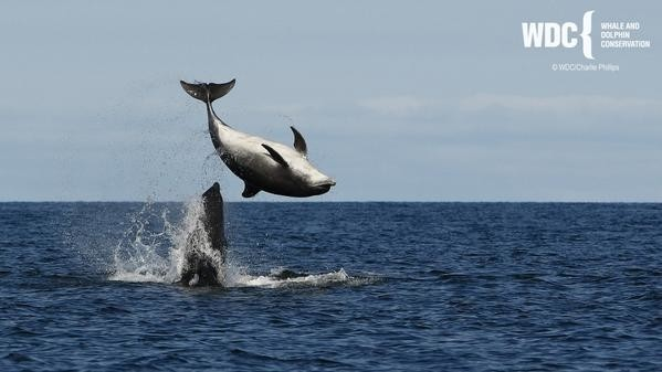 reasons to visit moray speyside dolphin centre