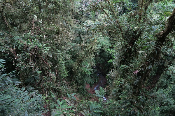costa rica travel blog monteverde cloud forest