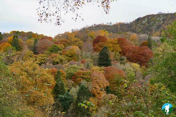 big tree country perthshire
