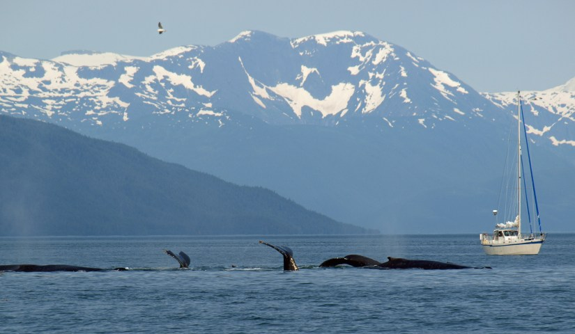 Whale Watching in Southeast Alaska
