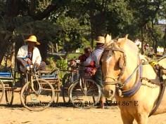 Horse Travel in Bagan