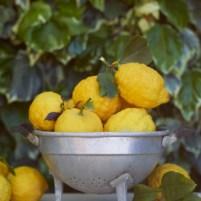 Pantelleria Lemons