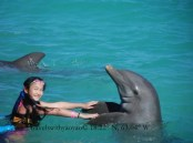 Swimming With Dolphins, Anguilla