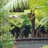 Yoga at Desa Seni