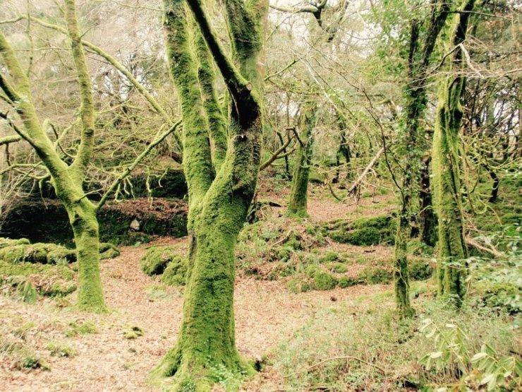 Green forest in Killarney