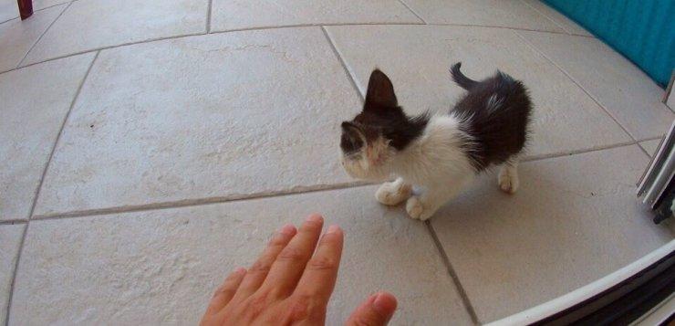 New cat, Found in Serbia