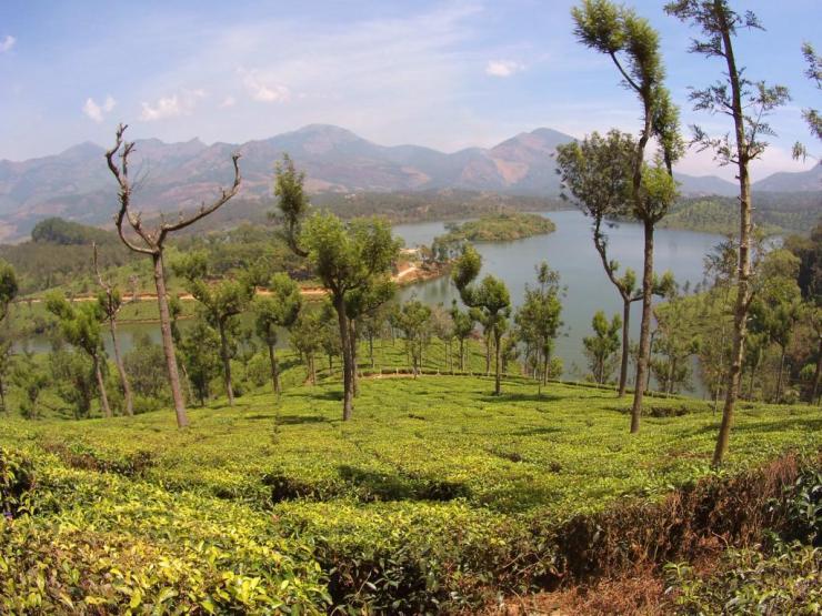 #keralablogexpress tea fields