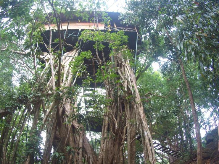 eco resort kerala tree-house
