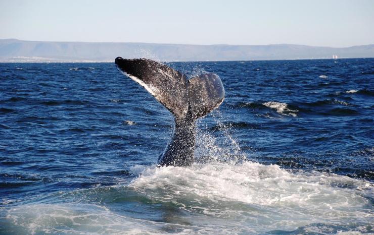 whale watching reykjavik