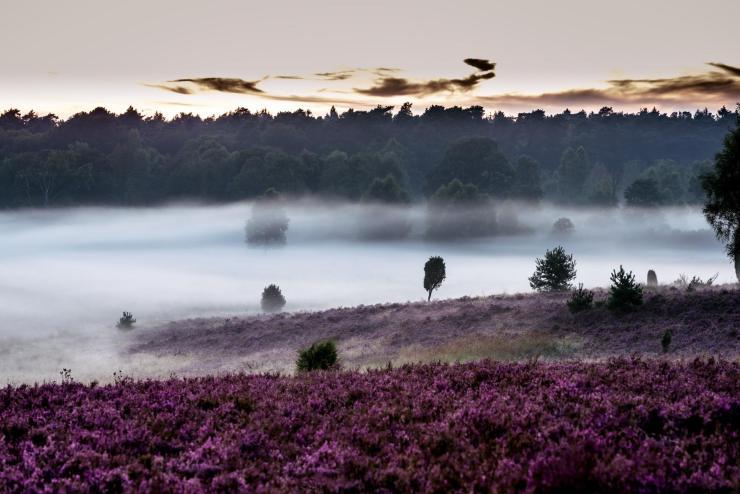 Surhorn in der Lüneburger Heide © Lüneburger Heide GmbH