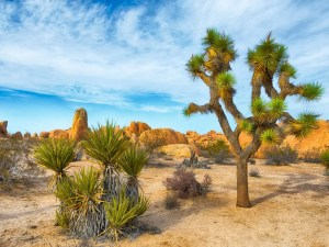 Joshua Tree National Park | The National Parks In California Travel Guide
