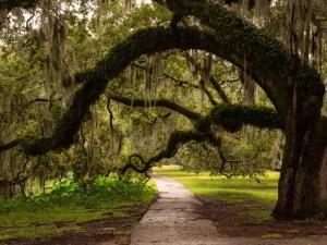 Garden District | New Orleans