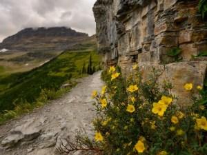 Highline Trail General Information | Glacier National Park