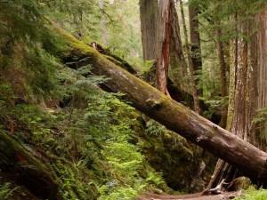 Mount Rainier National Park Sections