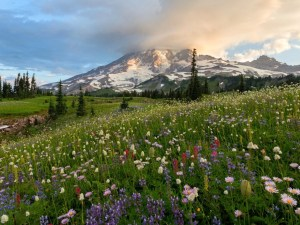 Mount Rainier National Park Suggested Itineraries Hotels Restaurants