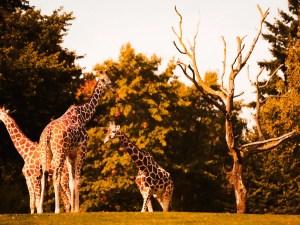 Oklahoma City Zoo | Oklahoma Travel Guide