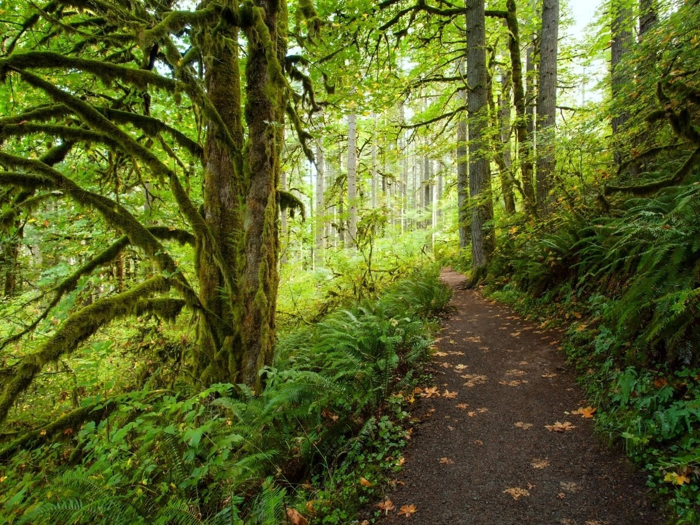 Planning Your Trip To Silver Falls State Park