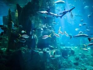 Ripley's Aquarium of the Smokies | Gatlinburg