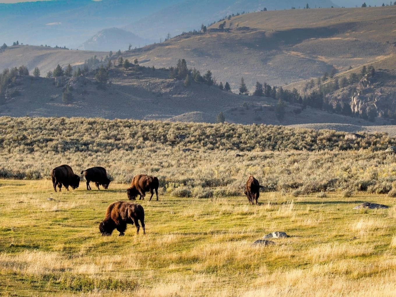 Yellowstone National Park Suggested Itineraries, Hotels & Restaurants
