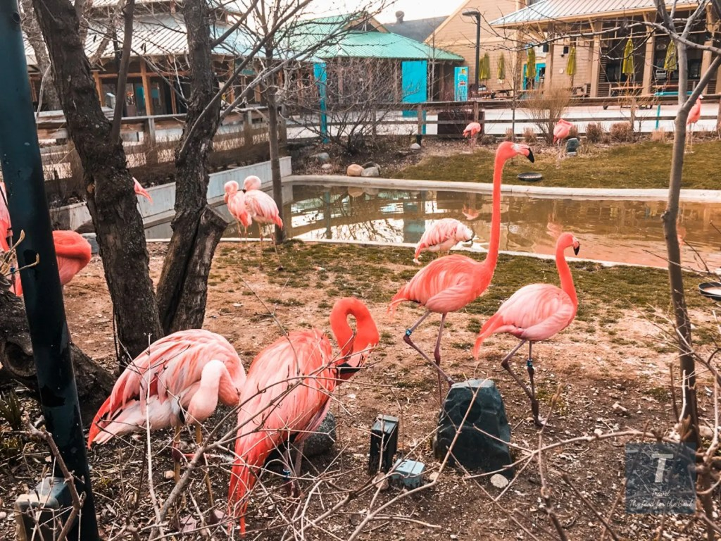 Indianapolis Zoo | Indiana Travel Guide
