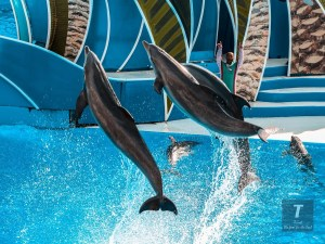 SeaWorld Orlando | Orlando Travel Guide