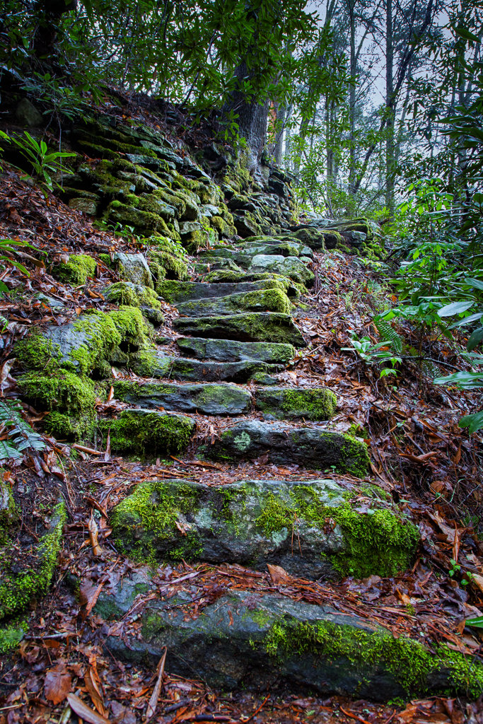 War woman Dell Hike: Moss covered stairs