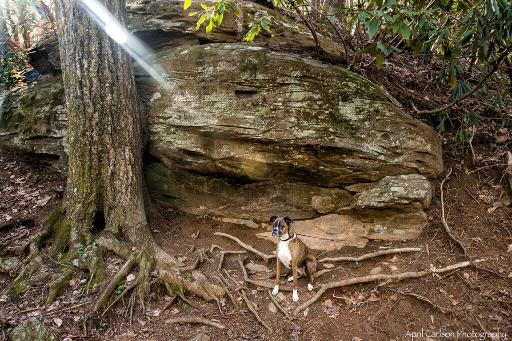 Hiking DeSoto Falls: Dog with large boulder