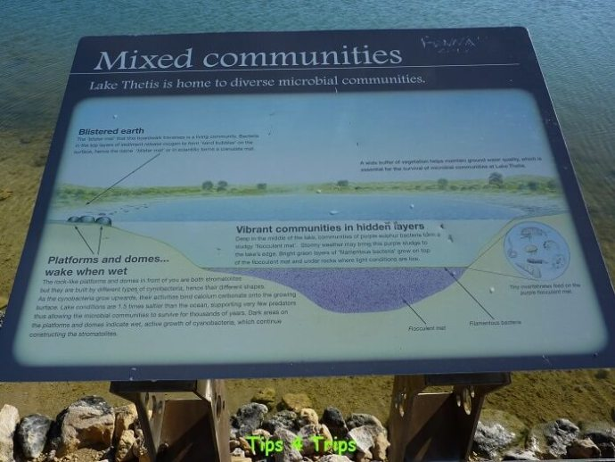 Signs explain how the stromotilies were formed at Lake Thetis. Learn what to expect at Lake Thetis located near Cervantes and the Pinnacles.