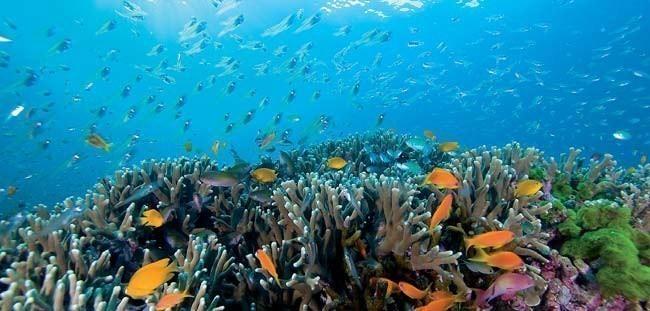 Similan Islands Scuba Diving