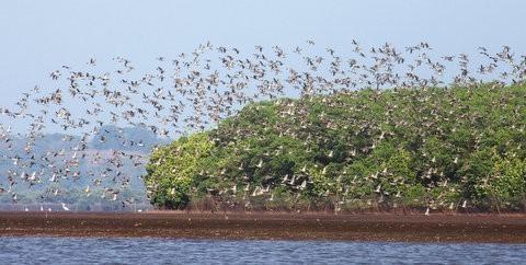 Dr. Salim Ali Bird Sanctuary 3