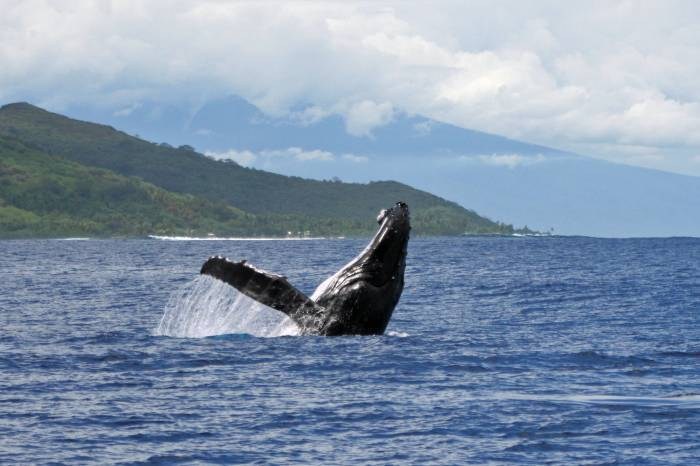 South America whale watching