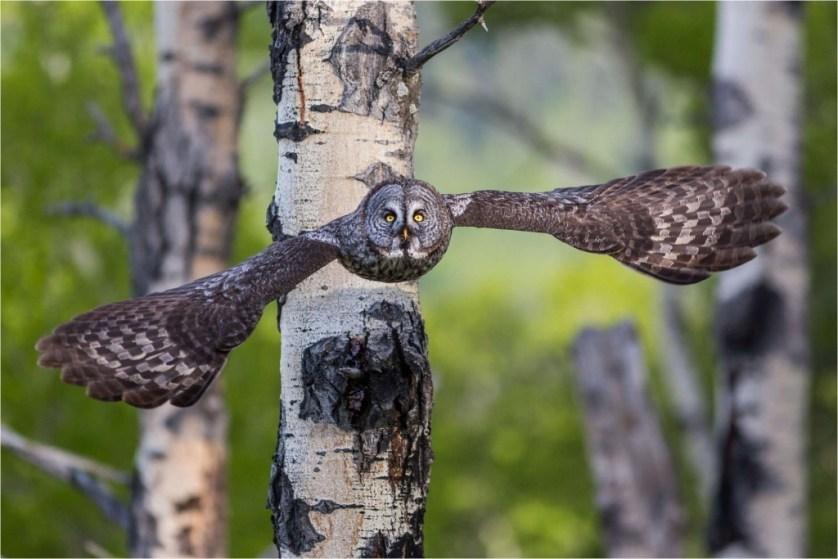 Jasper National Park wildlife 2
