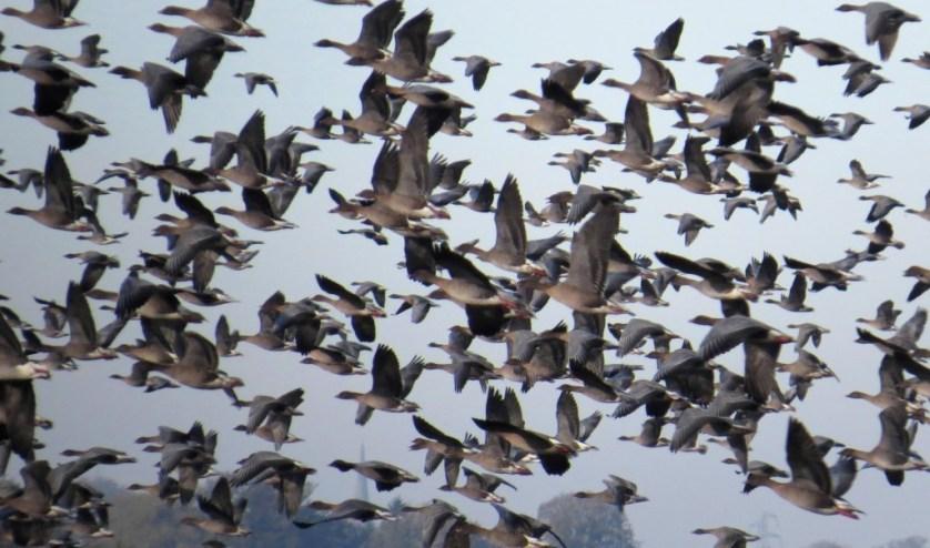 Philippines Birdwatching Diversity