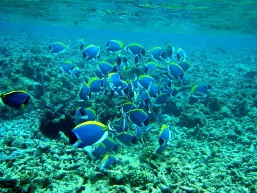 Seychelles scuba diving 4