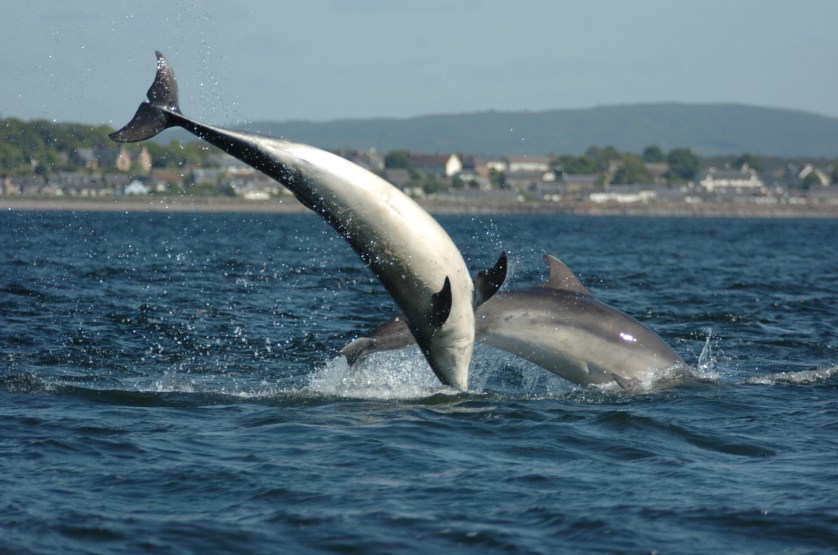 scotland whale watching and dolphin watching