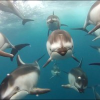 Best Places to Swim with Dolphins in California