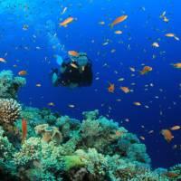 Best Snorkeling Locations In Puerto Rico