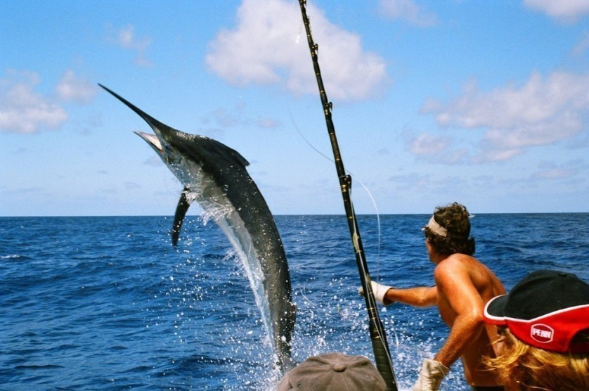 Big Game Fishing And Saltwater Fishing In New Zealand